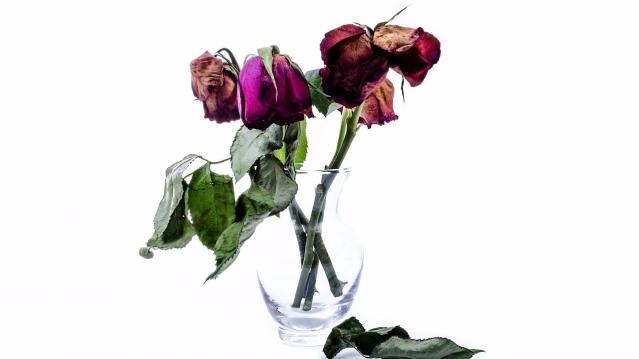 flower-314658_1280